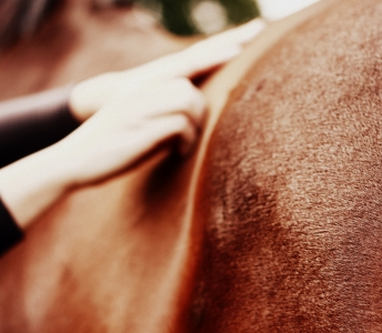 SFEERIMPRESSIE PAARDENSPORTMASSAGE
